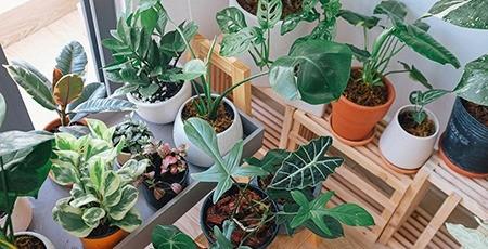 Вчені довели неефективність кімнатних рослин для поліпшення якості повітря приміщень